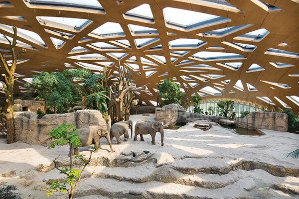 木建筑不只被用于住宅,也开始应用在公共建筑,瑞士苏黎世动物园的大象馆,便别出心裁使用大跨距的木构天幕,为象群营造充满自然气息的生活环境。